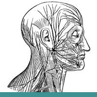 facial-muscles-nerves